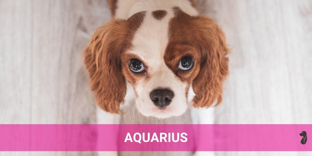 MONTHLY DOG HOROSCOPE JULY AQUARIUS