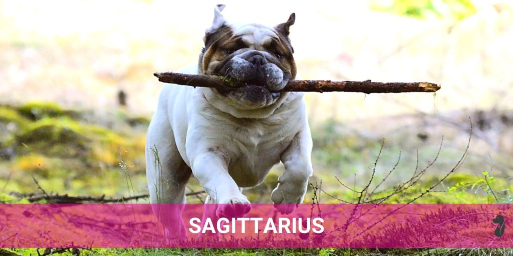 MONTHLY DOG HOROSCOPE JULY SAGITTARIUS